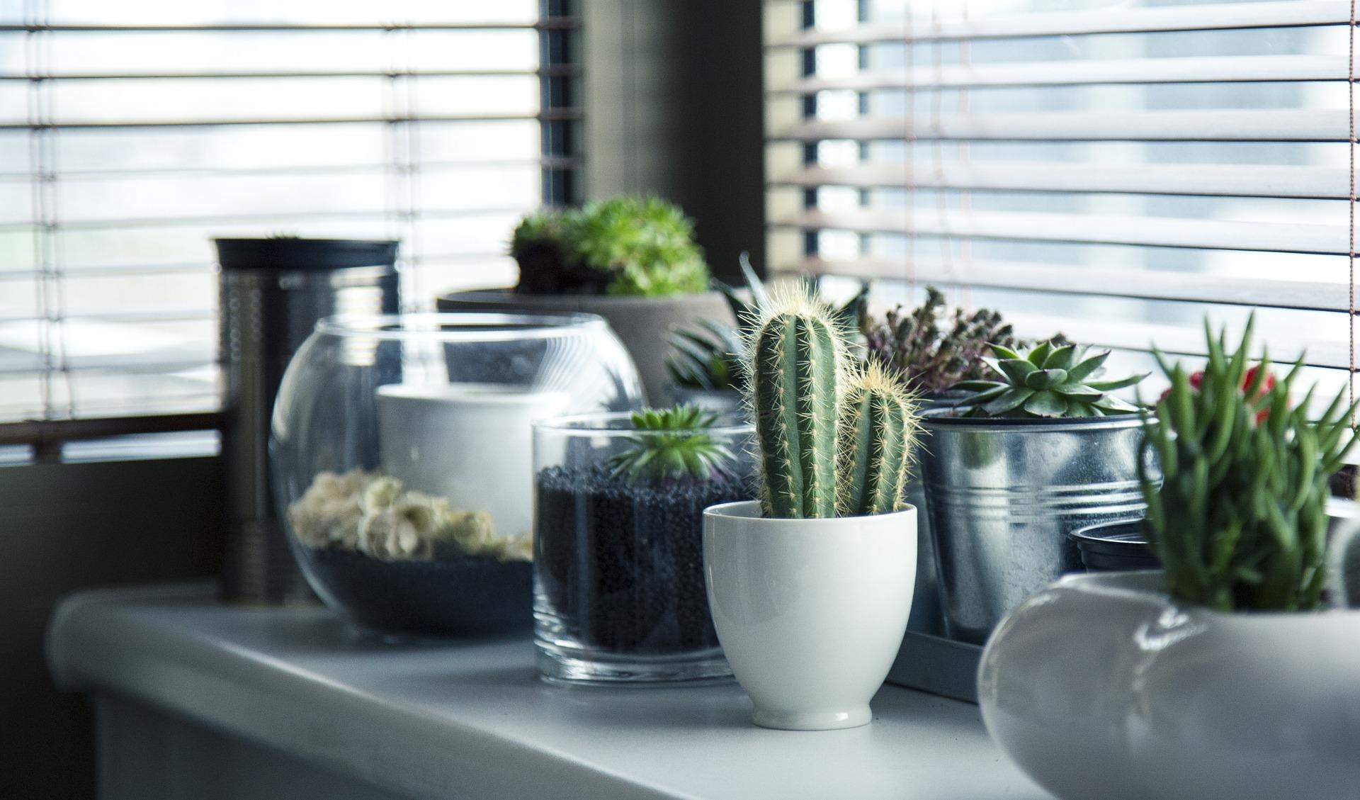 piante grasse bagno